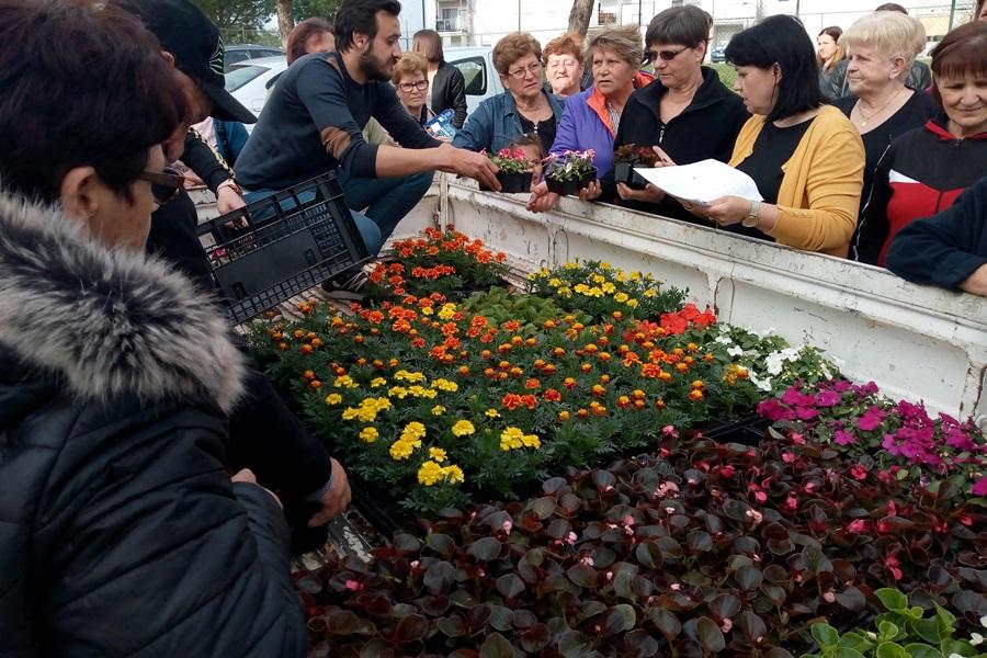 http://www.novigrad.hr/distribuite_gratuitamente_piu_di_settemila_piantine_di_fiori