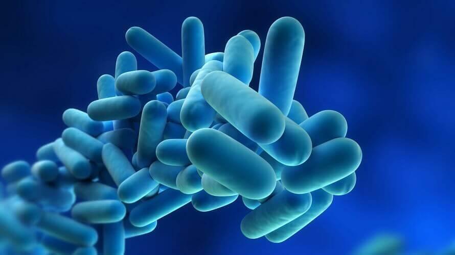 http://www.novigrad.hr/stozher_civilne_zashtite_izh_upozorio_na_moguu_pojavu_bakterije_legionella